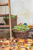 Autumnal still life with fruit and leaves Stock Images