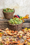 Autumnal still life with fruit and leaves on a wooden base Stock Images