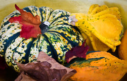 Autumnal still life of pumpkin and colocynth Royalty Free Stock Photography