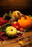 Autumnal still life Royalty Free Stock Images