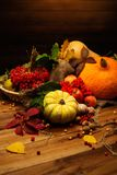 Autumnal still life Royalty Free Stock Image