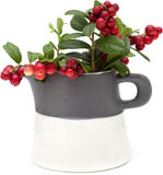 Autumnal stilllife. With ripe lingonberries Stock Photography