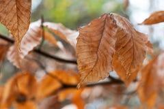 Autumn Foliage Soft Focused Bokeh Background stock photos