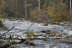 Autumnal surging river Stock Images