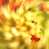 Autumnal swirl Royalty Free Stock Image