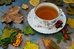 Autumnal tea with herbs. Chinaware cup and saucer with herbs and autumnal leaves Royalty Free Stock Image