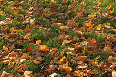 Autumnal texture Royalty Free Stock Image