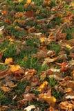 Autumnal texture Stock Image