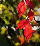 Autumnal textures in city park, Europe Royalty Free Stock Photos