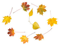 Autumnal time dance Royalty Free Stock Photo