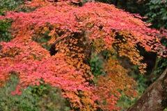 Autumnal tints Royalty Free Stock Image