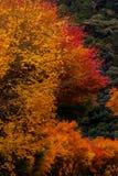 Autumnal tints Stock Image