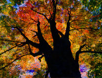 Autumnal Tree Royalty Free Stock Photos