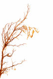 Autumnal tree branch Royalty Free Stock Photos