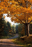 Autumnal tree in forest Stock Photos