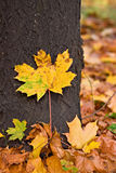 Autumnal tree fragment Stock Photo