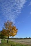 Autumnal Tree Royalty Free Stock Photo