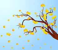 Autumnal tree with leaves. Stock Photography