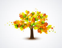 Autumnal tree Royalty Free Stock Image