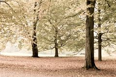 Autumnal trees Royalty Free Stock Photos