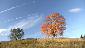 Autumnal trees stock video footage