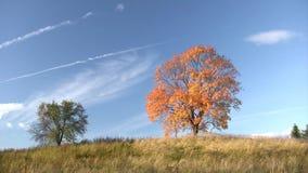 Autumnal trees stock video footage