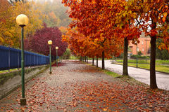 Autumnal trees along sidewalk in Alba, Italy. Stock Photo