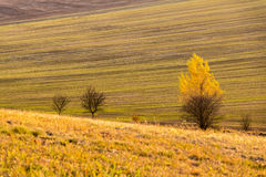 Autumnal trees in colorful farmland Royalty Free Stock Images