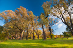 Autumnal trees landscape royalty free stock photography