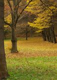 Autumnal trees in park. Scenic view of leafy Autumnal trees in park royalty free stock photography