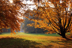 Autumnal trees in park Stock Photo