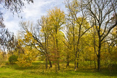 Autumnal trees in park. Scenic view of colorful Autumnal trees in picturesque park Royalty Free Stock Photos