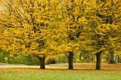 Autumnal trees in park. Royalty Free Stock Photos