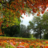Autumnal trees in the park Royalty Free Stock Photography