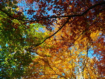 Autumnal trees with sky Stock Image