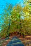 Autumnal trees in sunshine. Stock Image