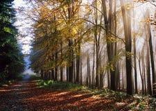 Autumnal trip Stock Photos