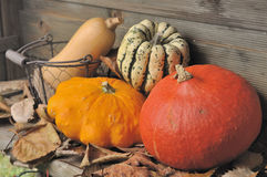 Autumnal vegetable Royalty Free Stock Photography