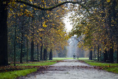 Autumnal view. An aged man pushing its bike through the park in an autumnal day stock image