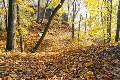 Autumnal view of deciduous forest Royalty Free Stock Image