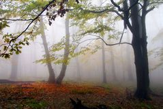 Autumnal view of deciduous wood Stock Image
