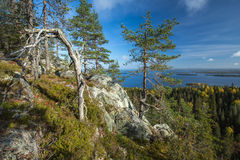 Autumnal view from Koli Royalty Free Stock Photography