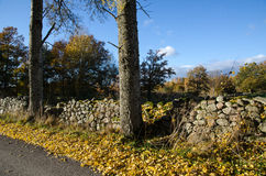 Autumnal view at roadside Royalty Free Stock Photography