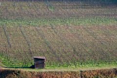 Autumnal vineyard Royalty Free Stock Image