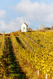 Autumnal vineyard, Czech Republic Stock Photography