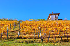 Autumnal vineyard on the hill in Italy. Stock Photos