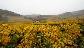 Autumnal vineyard landscape in Austria. Autumnal vineyard landscape in the Wachau Austria stock photography