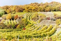Autumnal vineyards Stock Photos
