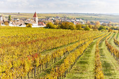 Autumnal vineyards Royalty Free Stock Photos