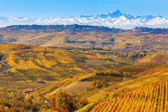 Autumnal vineyards and Alps in Piedmont, Italy. Royalty Free Stock Photos